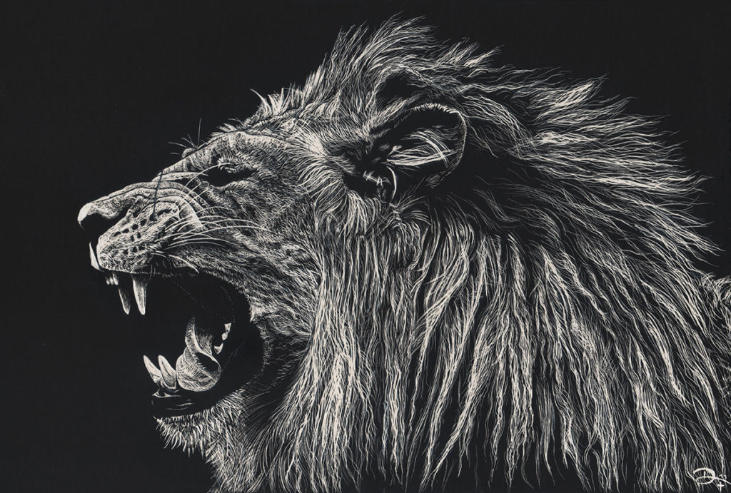 Scratchboard lion - Löwe - reference photo by Sooper Photography on deviantart